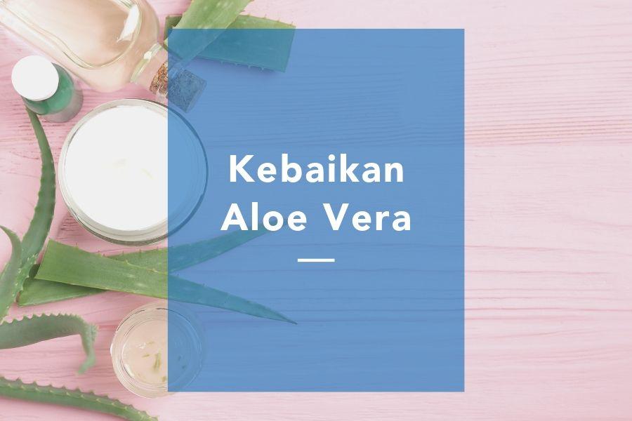 Kebaikan aloe vera